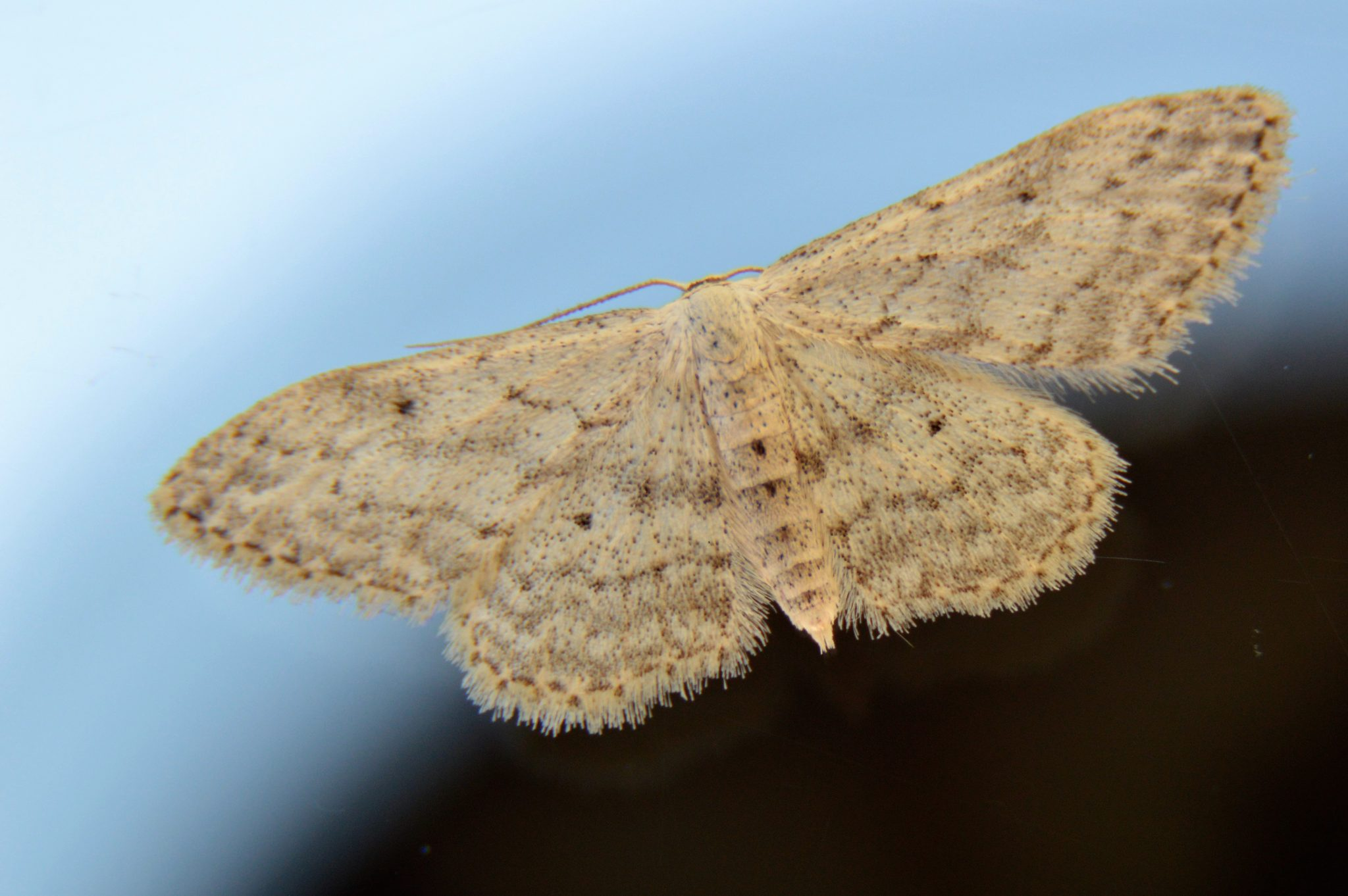 Macrofotografie nachtvlinder