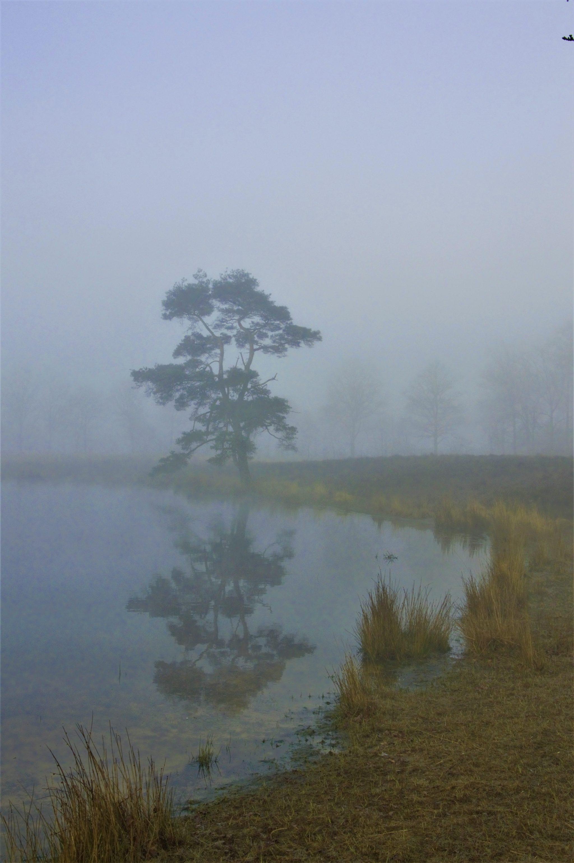 Allarts Oog mooie mist