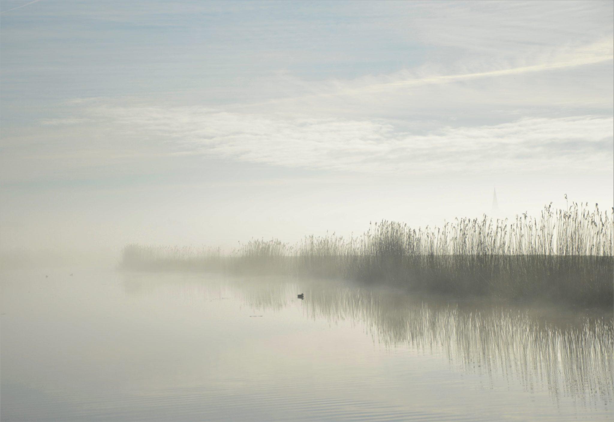 Friesland mistig mooi